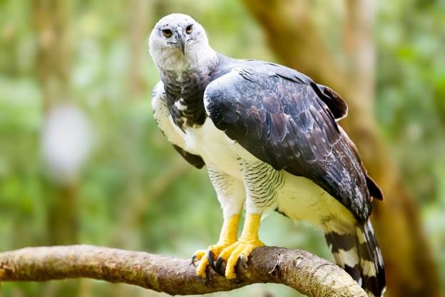 53d686cc9493b-animais-em-extincao-na-floresta-amazonica
