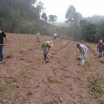 Plantio de mudas - Abril de 2009 (1)